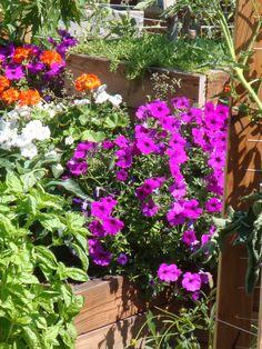 My Backyard Garden 2013