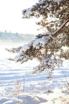 Ann-Kristina Al-Zalimi, winter, winter day, sunny winter day, sunny, sunshine, snow, finland