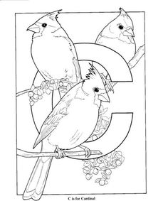 Coloring Pages Cardinal Animals Birds free printable