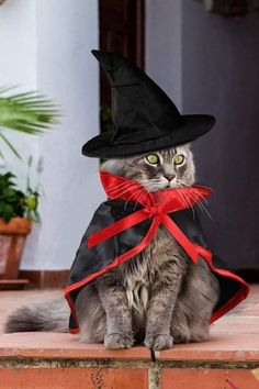 Kittens In Costumes, Cute Cat Costumes, Pet Halloween Costumes, Animal Costumes, Pet Costumes, Halloween Cat, Elf Costume, Christmas Costumes, Cat Celebrating