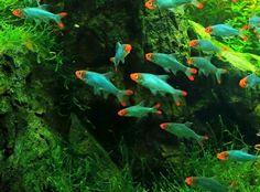 Monster Fishing, Fish Breeding, All Fish, Freshwater Aquarium Fish, Beautiful Fish, Exotic Fish, Underwater World, Tropical Fish, Fish Tank