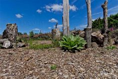 totholz-naturgarten-wildlife-garden-dead-wood-deadwood-hackschnitzel-hackschnitzelweg-wood-chips.jpg (1000×667)