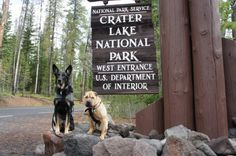 Crater Lake is spectacular but, like most national parks, dogs are severely restricted. Luckily, Oregon has no shortage of pet friendly national forests! After driving around the lake, we stopped at the Rogue River Gorge in Rogue River National Forest. The boys got a chance to stretch their legs while we reveled in more ridiculous scenery. Find more pet friendly places to stay and things to do near Crater Lake National Park here: http://www.gopetfriendly.com/browse/united-states/oregon/bend