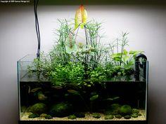 """""""Nature Aquarium"""" Riparium in 15-gallon."""