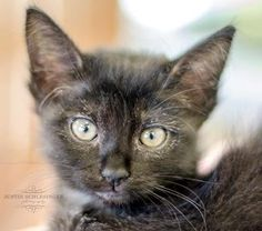 Milo was adopted on 9/14/14!
