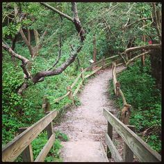 Trails in the woods that look like story book scenes #trail #barnegat #lbi #picturesque #fairytale - http://www.iheartlbi.com/trails-in-the-woods-that-look-like-story-book-scenes-trail-barnegat-lbi-picturesque-fairytale/