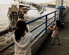 bird | 05/05/2012 #photoadaymay