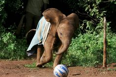 Such a cute article about caring for orphan elephants.