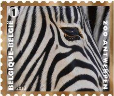Stamp: Grevy's Zebra (Equus grevyi) (Belgium) (Wild Animals) Mi:BE 4391,Sn:BE…