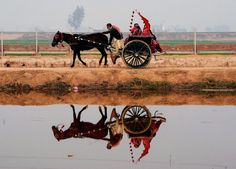 Pakistani villagers travel on a horse-cart in the outskirts of Lahore. (AFP)