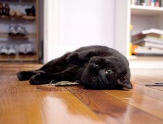 Black Cat Rescue Finds Homes for Hard-to-Place Kitties -  Who needs a Little Black Dress when you can have a Little Black Cat -- or a Big Black Cat?  It's not like the dress will give you cuddles, or be happy to see you in the morning.