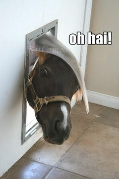http://kitcameo.blogspot.jp/2011/08/mini-horse-in-doggie-door.html