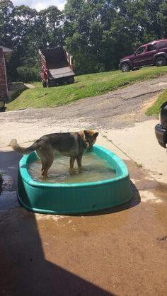 Kodas own pool