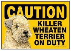 Wheaten Terrier on Duty