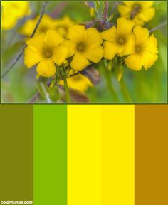 Spring Is Coming Soon! Color Scheme from colorhunter.com