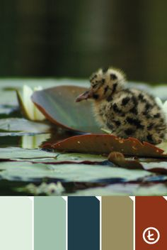Żabi Staw  #colours #palette