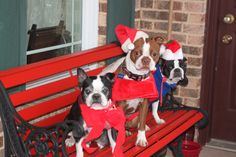 Toby Buster and Bella.  Merry Merry!
