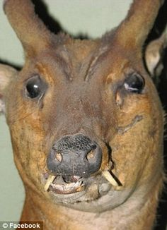 A stuffed deer posted on the facebook group called 'Badly stuffed animals'  a deer?? For real??