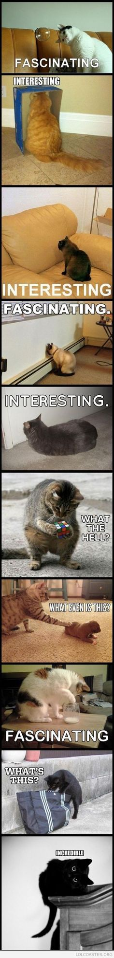 Cats That Find Things Interesting -- hahaha!