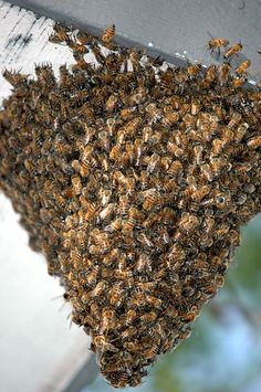 Swarm Prevention Alternative – Checkerboarding Results and Conclusions. article by Walt Wright