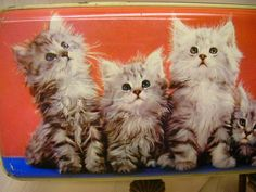 Thorne\u0027s Toffee Tin Cute Kittens on Front 10\  Long Cat Lover\u0027s Tin & Bamboo Tray Teapot and Teacup Design 13\