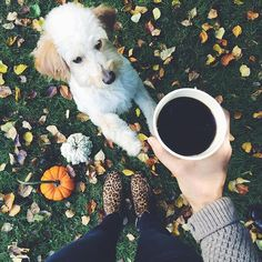 Fall friends. #coffeenclothes #coffee #dogs