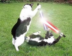 Cats And Star Wars: A Photo Series - World's largest collection of cat memes and other animals Funny Cats, Funny Animals, Cute Animals, Animal Funnies, Crazy Cat Lady, Crazy Cats, I Love Cats, Cool Cats, Here Kitty Kitty