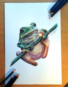 25 wunderschöne und realistische Tierzeichnungen auf der ganzen Welt