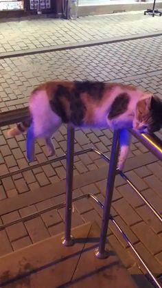 Theres physics and then theres cat physics cats funny pictures Cute Funny Animals, Cute Baby Animals, Animals And Pets, Funny Cats, Cool Cats, I Love Cats, Drunk Cat, Tier Fotos, Crazy Cats