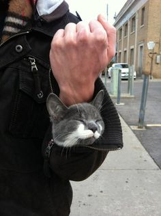 This perfect-sized travel buddy.   31 Cats Who Will Make Your Day A Little Brighter