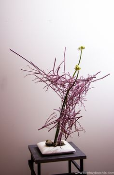 Mikado Branches of hemerocallis & Ornithogalum flowers - Floral Art: Ilse Beunen www.be Photography: Ben Huybrechts Ikebana Flower Arrangement, Ikebana Arrangements, Flower Vases, Flower Art, Floral Arrangements, Japanese Plants, Japanese Flowers, Ikebana Sogetsu, Tableau Design