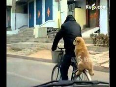dog sit back and enjoy bicycle ride