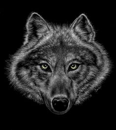 Eyes of the Wolf - scratchboard design for t-shirts by Sher T-Art