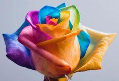 Imágenes de Flores Bonitas, beautiful flowers