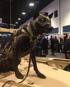 SOFIC 18 - Trident K9 Tactical Helmet - Soldier Systems Daily