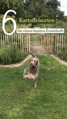 Potager Garden, Gardening, Backyard Bbq, Edible Garden, Garden Planning, Home And Garden, Dogs, Animals, Inspiration