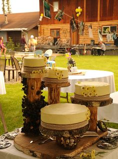 Outdoors traditional country style: wedding cakes, yellow icing with daisies, displayed on logs with family antique silver (silverware & mirrors), birds nests with blue eggs, white table cloths, log house, Wedding of Jessie and Chris, Fairbanks, Alaska, U