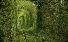 Fairy Tale Tunnel of Love Found in Klevan Ukraine  #beautifulnature #beauty #beautifuldestinations #aroundtheworld #awesome #ukraine #thetunneloflove #love #lovely #naturelovers #natureart #nature_perfection #natural #beautiful by extravaganza27