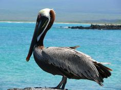 Animal magic | eco luxury in the Galapagos