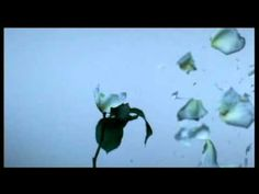 Amon Tobin - At the End of the Day #music