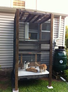 I built an outdoor cat enclosure after one of my cats was diagnosed with gallstones. They were indoor-outdoor cats for a few years, but I had long wanted to build them something like this that keeps them closer to home and allows them to enjoy the fresh a Cage Chat, World Cutest Dog, Outdoor Cat Enclosure, Outdoor Cats, Indoor Outdoor, Cat House Outdoor, Cat Cages, Cat Run, Cat Playground