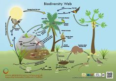 Bio-diversity web shoeing how nature is connected in one giant web and that effecting one could affect all. Ap Human Geography, Solar System Projects, Learning Place, Science Facts, Nature Study, Earth Science, Cool Posters, Ecology, Mammals
