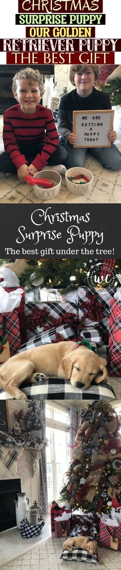 Christmas surprise puppy, our golden retriever puppy. the best gift under the tree this year! Buffalo check gift wrap, rae dunn dog bowls and a letter board. cute way to surprise your kids with a puppy at christmas!  Christmas Surprise Puppy Our Golden Retriever Puppy The Best Gift Puppy Gifts, Retriever Puppy, Buffalo Check, Christmas Christmas, Dog Bowls, Letter Board, Best Gifts, Gift Wrapping, Puppies