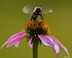 5 Facts About Bumble Bees—and How To Help Them