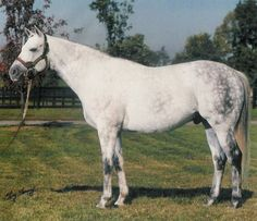 Black Tie Affair(1986)(Colt)Miswaki- Hat Tab Girl By Al Hattab. 5(C)x5(C)x5(F) To Nasrullah. 45 Starts 18 Wins 9 Seconds 6 Thirds. $3,370,694. Won BC Classic(G1), Iselin H(G1), Michigan Mile, Washington Park H, Cornhusker H, Stephen Foster H, 3rd BC Sprint(G1), Razorback H(G3). Became 1991 Champion Older Horse And Horse Of The Year As A 5 YO When He Matured Into A Top Class Runner.