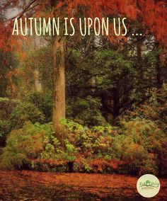 AUTUMN IS UPON US - 12 HOUSEHOLD TIPS TO PREPARE FOR WINTER I know it is normal to do a big cleanout in Springtime, after being couped up in the house for winter, but it is just as important to prepare for the colder months of the winter...  #Autumn #Fall #Household #tips #preparing #winter     www.earthlypassion.com