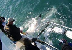 Great White Shark Diving, Hermanus, South Africa Great White Shark Diving, Outdoor Activities, South Africa, Waves, African, Bucket, Ocean Waves, Buckets, Aquarius