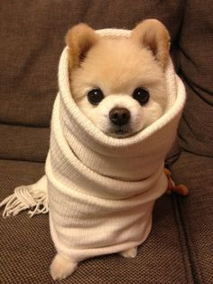 looks like he is wrapped up in a long neck scarf!!!