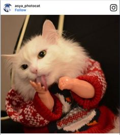 Funny Cat Pictures Projects To Try Pinterest Funny Animal - 32 adorable photos cats growing