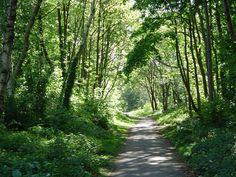 Monton Salford walk to Worsley